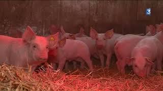 Portrait d'un éleveur de porc en Charente