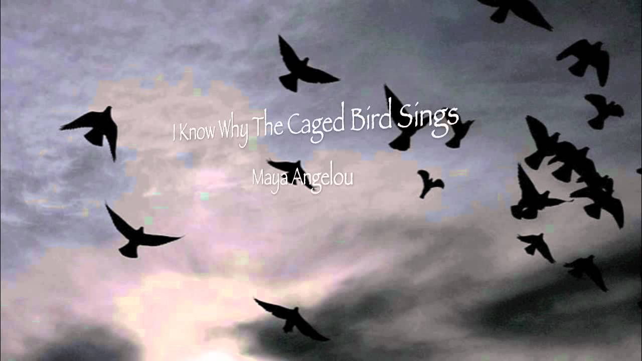 a summary of i know why the caged bird signs Lines describe the liberty of a free bird that can move anywhere it wants with no restrictions the bird has the freedom to move as freely as the wind moves it flies in the direction of the current.