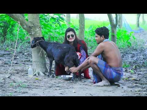 Goat milk in the city Beautiful girl village | Goat's milk | Dorojati Kholo