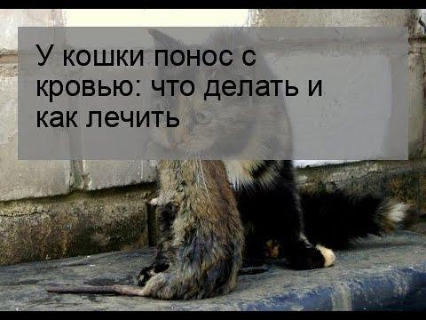 У кошки понос с кровью что делать в домашних условиях