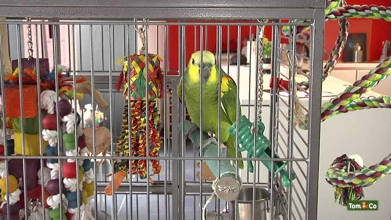 L Interaction Mon Oiseau Tom Co Youtube