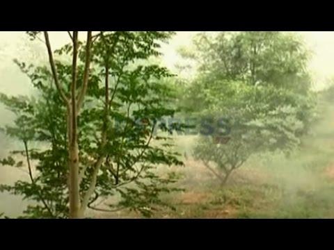 Natural farming in Battayi or Mosambi by G Ramana Reddy - Express TV