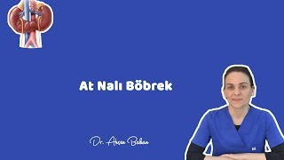 AT NALI BÖBREK - Dr. Ahsen Bakan