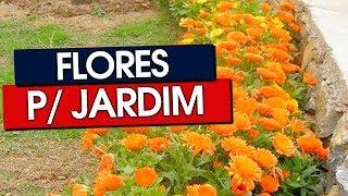 42 FLORES PARA JARDIM PARA TODOS OS CLIMAS