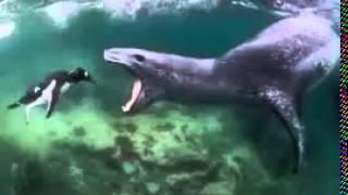 Śmieszne Zwierzęta Morskie