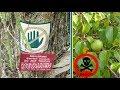 এই গাছের নীচে দাঁড়ালেই মৃত্যু অবধারিত !!! Most Dangerous Tree In Bangla