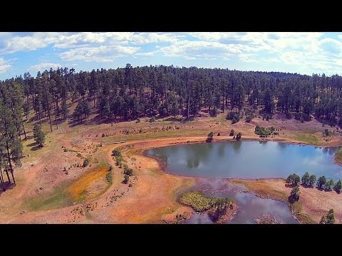 Flight in Forest Lakes Arizona