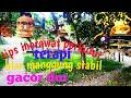 Cara Terapi Perkutut Lokal Biar Mau Manggung Los Negel Gayer Gacor Dor Tak Kowor Kowor  Mp3 - Mp4 Download