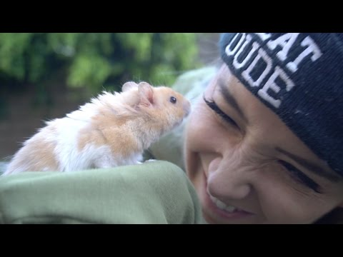 Thumbnail: We Got A Hamster