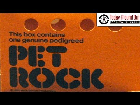 How Did the Pet Rock Fad Start?