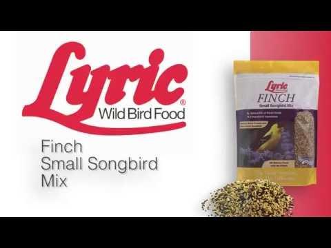 Lyric Finch Small Songbird Mix