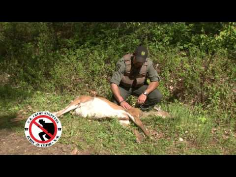 Crime of the Week: Curbing illegal Hunting and Trapping practices in New Brunswick