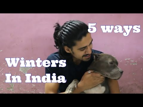5 Ways to Protect your DOGS this WINTER | Wildly Indian