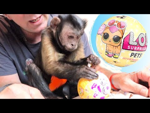 Monkey LOL Surprise Pets Unboxing!