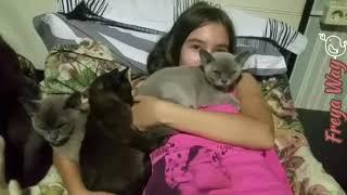 Где и как живут бурманские котята питомника Freya Way