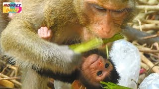 Welcome! New baby newborn in Mila Group|Youngest mom give birth so cute newborn baby|Monkey Daily884