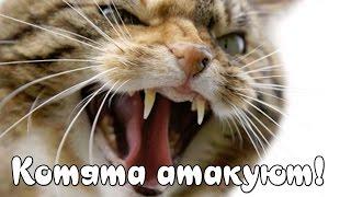 Котята Против Енотов! - Strikeforce Kitty: Last Stand