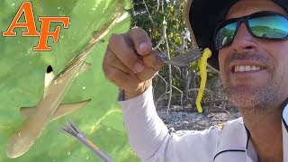 Spear Hunting Sashimi, Wild Oysters and Sharks EP.424