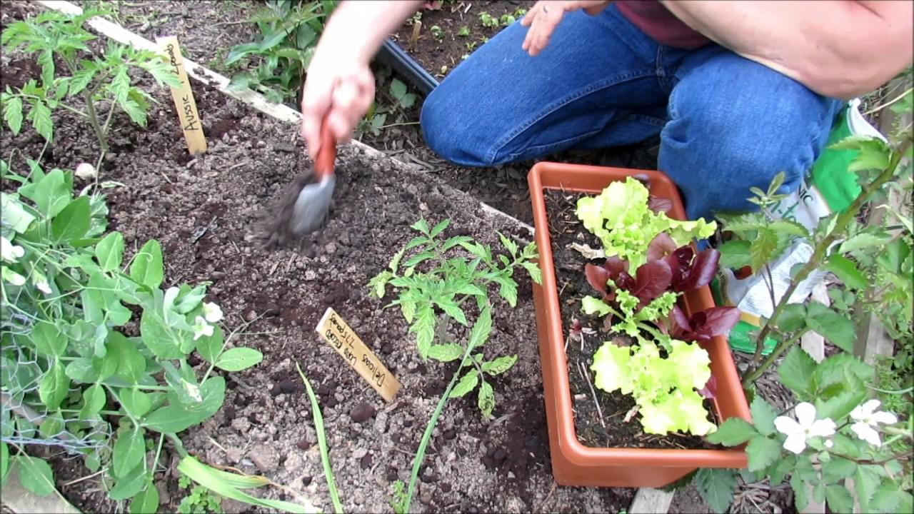 Planting, Harvesting, Bolting U0026 Heat Tips: Gardening Coast2Coast (2)