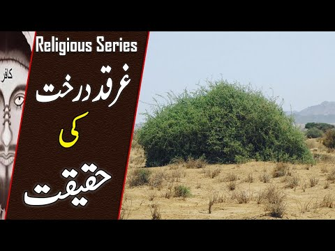 Reality Of GHARQAD Tree | The Tree Of Jews | Why Israel Planting Millions Of Boxthorn Tree | TIN