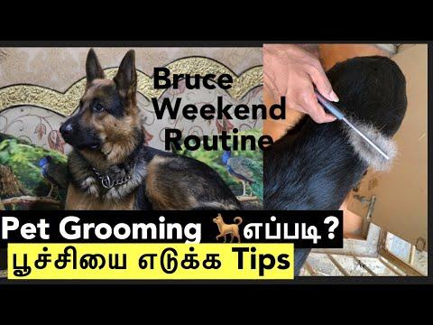 Pet care tips in tamil | How to groom our pet | pet vlog tamil | German shepherd |#mahabepositive