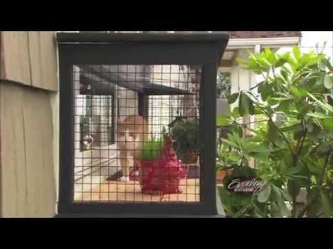 Evening Magazine Cats Amp Outdoor Cat Enclosures Youtube