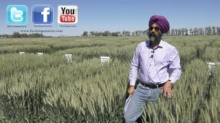 Dr. Harpinder Randhawa discussed spring wheat breeding
