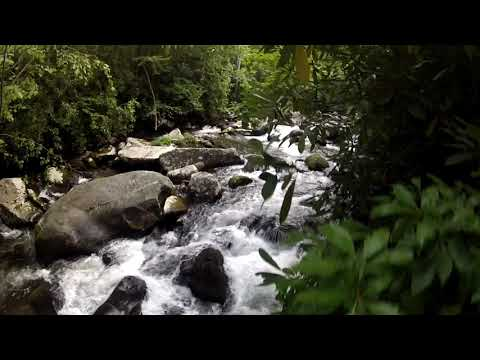 Forney Creek Great Smoky Mountains