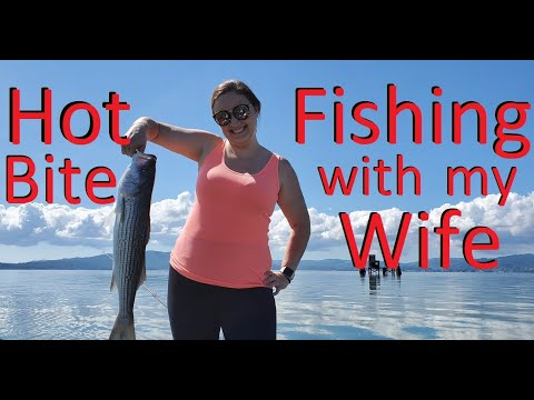 Halibut Update | Hot Striper Action Fishing With My Wife | San Francisco & San Pablo Bay