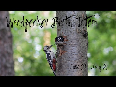 Woodpecker Birth Totem (Cancer): 🌊 The One