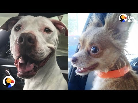 Shelter Dogs React to Being ADOPTED | The Dodo