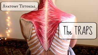Anatomy Tutorial: The TRAPS!!