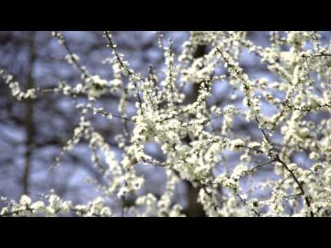 Spring 0, 1 in Málinec, Slovakia (Recomposed by Max Richter - Vivaldi:The Four Seasons)