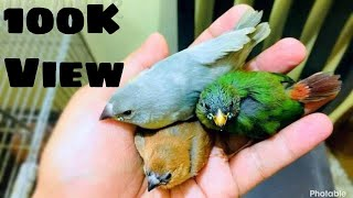 Best finch birds collection ever most beautiful birds in aviary