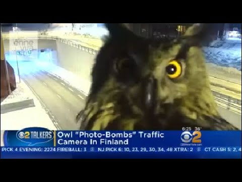 "Owl ""Photo-Bombs"" Traffic Camera In Finland"