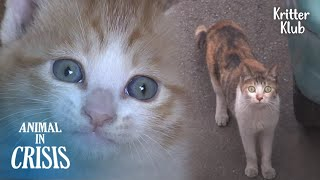 What Would Happen If You Try To Steal Kittens From Mother Cat..? (Part 2) | Animal in Crisis EP228