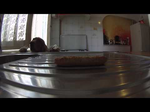 Determined dog won't stop jumping for cookie