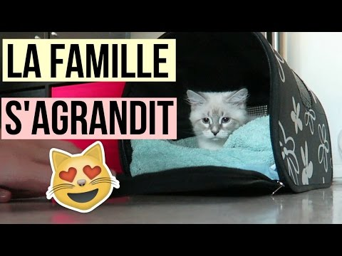MAINTENANT ON EST 3 : On Adopte Notre Petit Chat !
