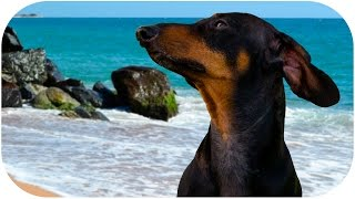 Get Fit For Summer with Doxie Din