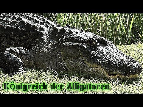 Königreich der Alligatoren 3D Doku, deutsch, über Krokodile & Alligatoren, Tier-Doku, Naturdoku