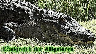 Königreich der Alligatoren 3D (Doku, deutsch, über Krokodile & Alligatoren, Tier-Doku, Naturdoku)