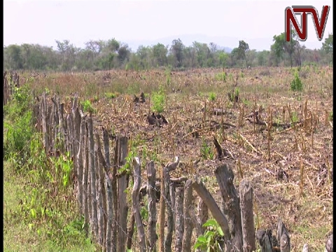 Government departments meet over prolonged dry spell