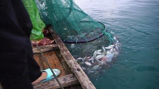 一网拉起两三百斤鱼,水面瞬间沸腾了,阿兴...