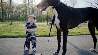 Дети и животные. Приколы