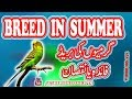 kandum bachay q paida hotay hain? Garmion Main Breed K Nuqsanat. Video No 171