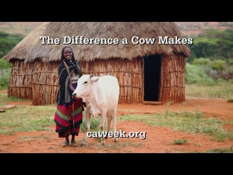 Christian Aid Week 2015: The Difference a Cow Makes