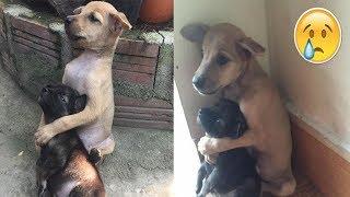 Der Grund, warum diese zwei Hunde sich nicht aufhören zu umarmen, ist unglaublich...