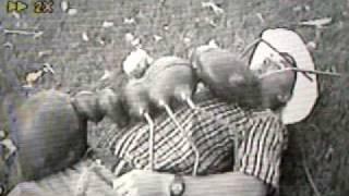 GIANT ANTS EAT BAKERSFIELD