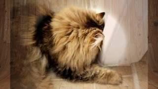 видео Причины почему кот смотрит в стену