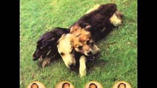 The World Of Skin - Black Eyed Dog (06)